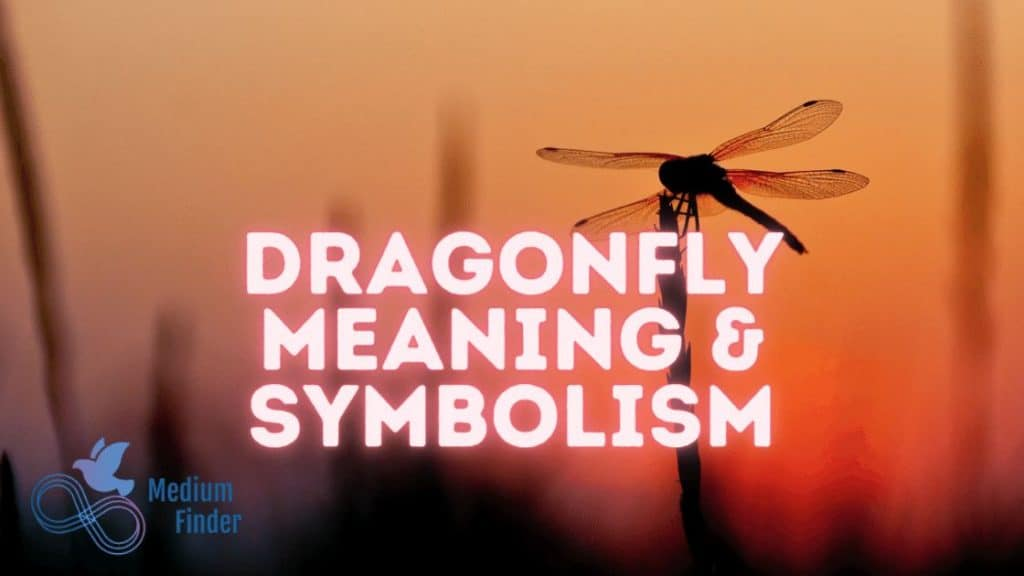 Dragonfly Meaning & Symbolism, What Does a Dragonfly Symbolize?
